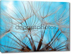 макро фотография одуванчика семян