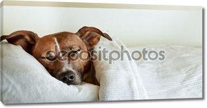 Собака сна