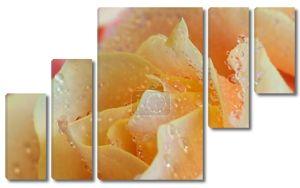 Желтая роза в каплях воды