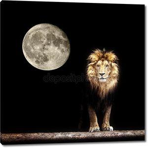 Портрет красивой Лев, Лев в темноте и Луна