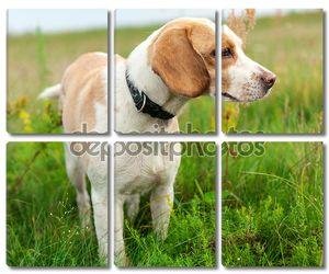 Бигл Собака на зелёный луг
