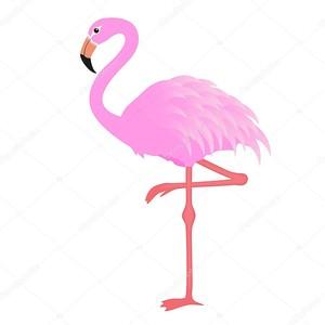 Фламинго на белом фоне
