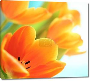 Арт тюльпаны