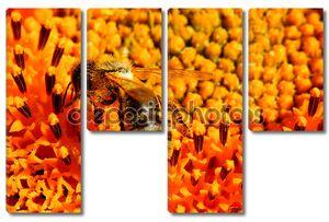макро фотографии Пчела на подсолнечник