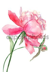 красивый пион цветок, живопись акварелью