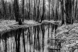 Живописные весеннего леса и реки. Черно белые фото.