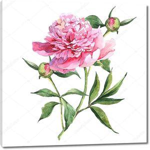 Ботаническая акварельная иллюстрация