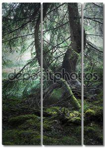 Деревья с Мосс