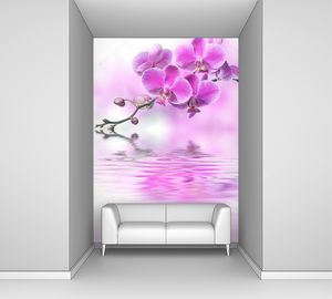 Цветы орхидеи, отражение в воде