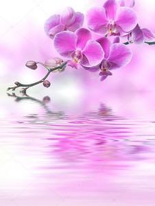 красивый фиолетовый цветы орхидеи, отражение в воде