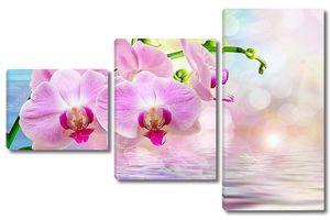 Орхидея над водой крупным планом
