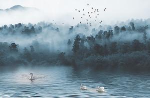 Туман над лесным озером