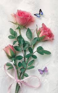 Розы перевязанные ленточкой