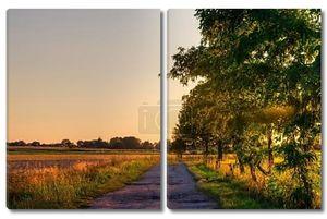 Сельские дороги и деревья на закате