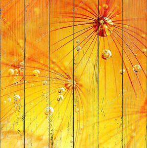 Желтый одуванчик с каплями росы