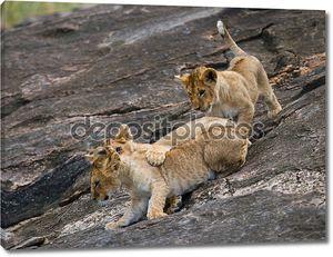 Три льва детенышей игра