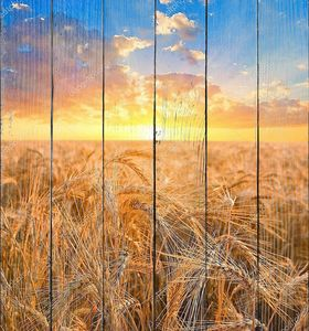 Восход солнца среди поля пшеницы