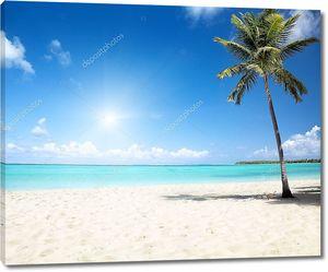 Море и кокосовой пальмы