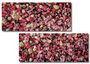 Стена красных и белых роз