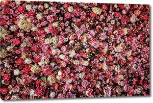 Крупным планом изображение красивых цветов стены фон с удивительным красных и белых роз.