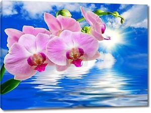 Орхидея на фоне неба