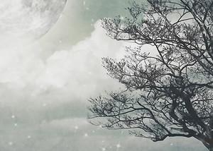 Дерево в морозном тумане