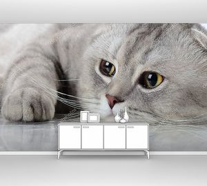 Серый красивый Взрослый Кот