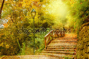 Stone stairs in a park