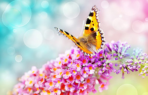 Бабочка на сиреневой кисти