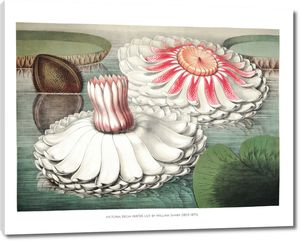 Гигантская водяная лилия II
