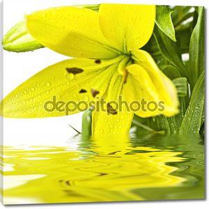 Карты whise цветок желтый лилии