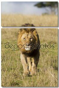ходьба льва