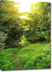 Зеленый летом лес
