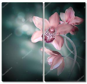 Орхидеи в капли росы на белом фоне