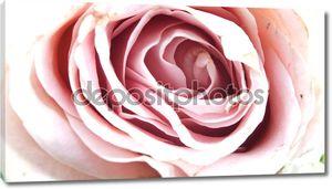 Потертые розовый