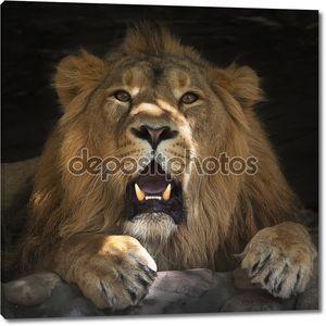 Смотреть лежа льва с некоторыми плашок солнечного света на его лице.
