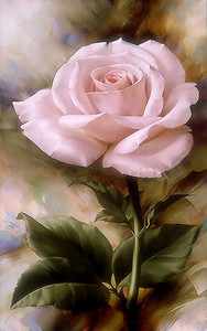 Очаровательная роза
