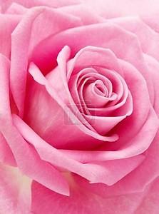 розовый повысился макрос
