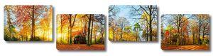 Красочные осенние пейзажи в парке