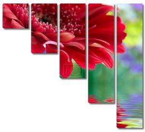 Красная Ромашка Гербера с мягким фокусом отражение в воде