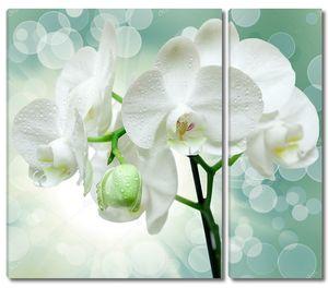 Крупный план белого цветка орхидеи