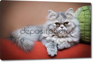 персидская кошка на диване