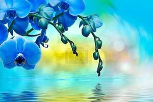 Фон орхидеи у воды