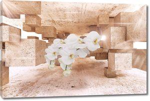 Орхидеи в кубическом пространстве
