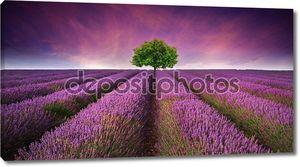 Потрясающий пейзаж поле лаванды лето закат с одного дерева