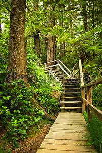 Path in temperate rainforest