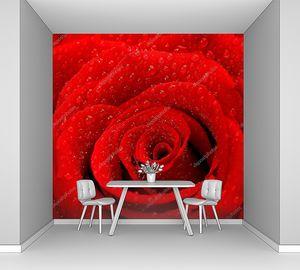 красный розовый фон