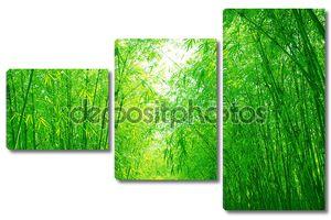 Зеленый бамбук роща в день весны