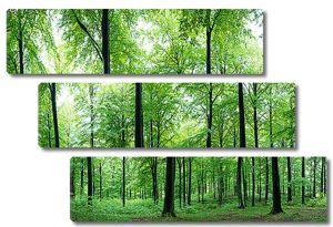 Лето в лесной чаще