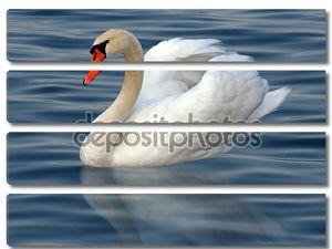 Лебедь на воде  с отражением